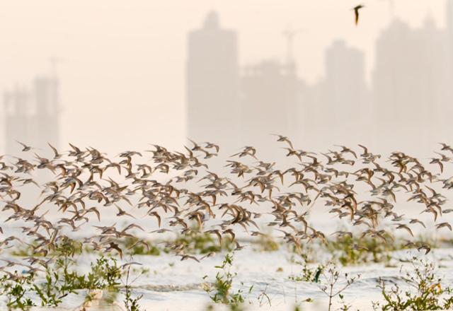 Panama Bay Wetland Refuge, photo by Karl Kaufmann, Audubon Magazine
