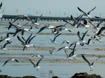 Bird lovers will delight in new Panama Bay Wetland Wildlife Refuge