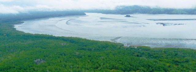 Panama Bay mangroves