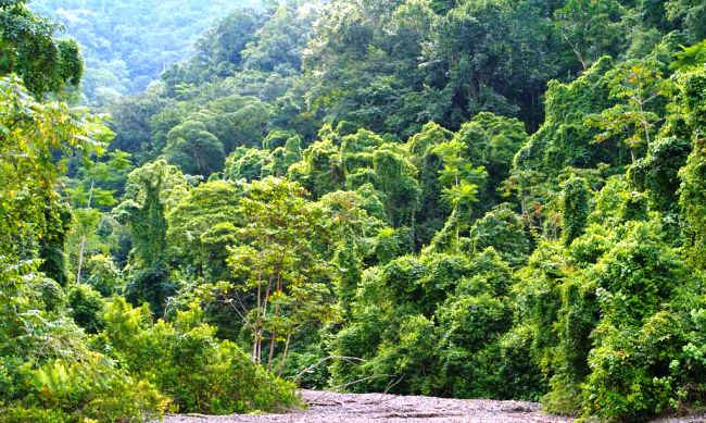 People need nature. See why in the Costa Rica rainforest.