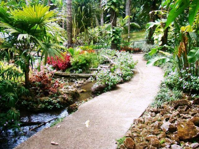 Orchid Festival 2015 At Else Kientzler Botanical Gardens Costa Rica