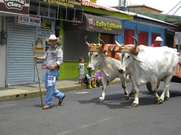 Oxcarts and cultural fiestas in Atenas Costa Rica