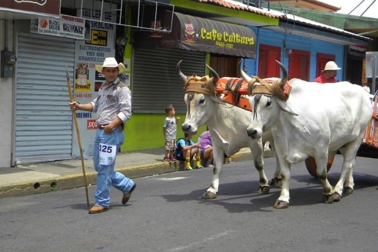 Oxcarts and cultural fiestas in Atenas Costa Rica