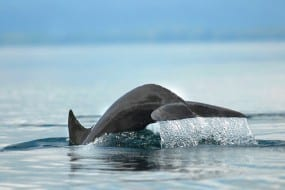 Protecting Golfo Dulce in Costa Rica on World Oceans Day 2015