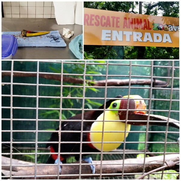 Found toucan bill and Grecia the toucan in Costa Rica