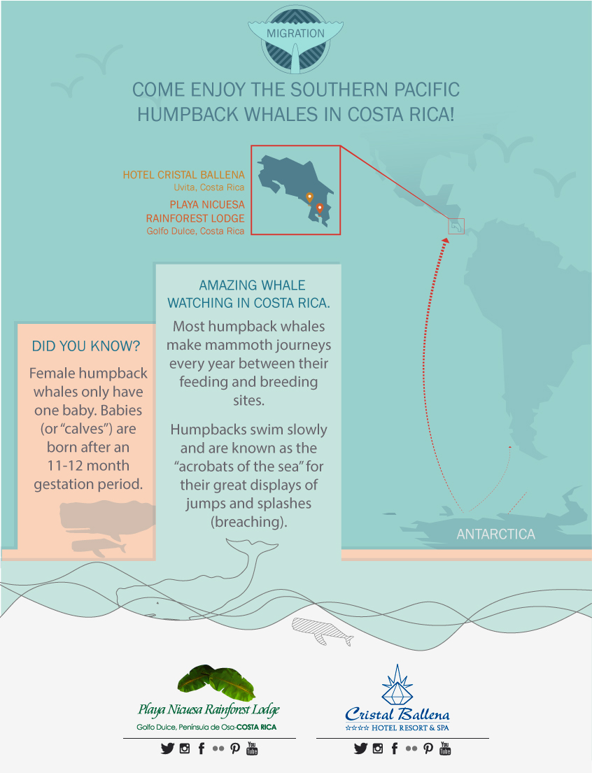 Come Enjoy the Southern Pacific Humpback Whales in Costa Rica!
