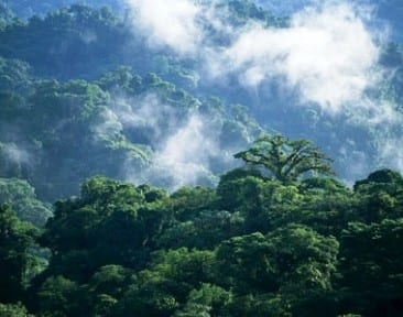 You can't visit Costa Rica without seeing the Monteverde cloud forest