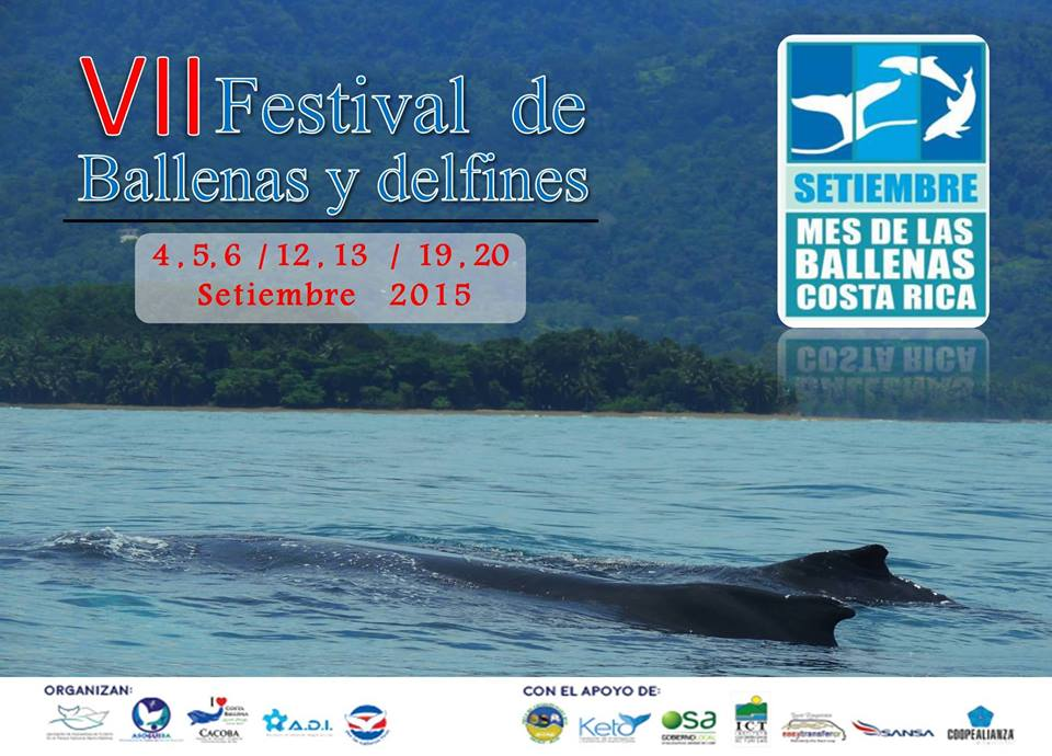 Whale Festival 2015 in southern Costa Rica