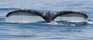Costa Rica whale watching season in September