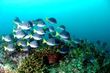 Protecting the coral reefs in Golfo Dulce Costa Rica