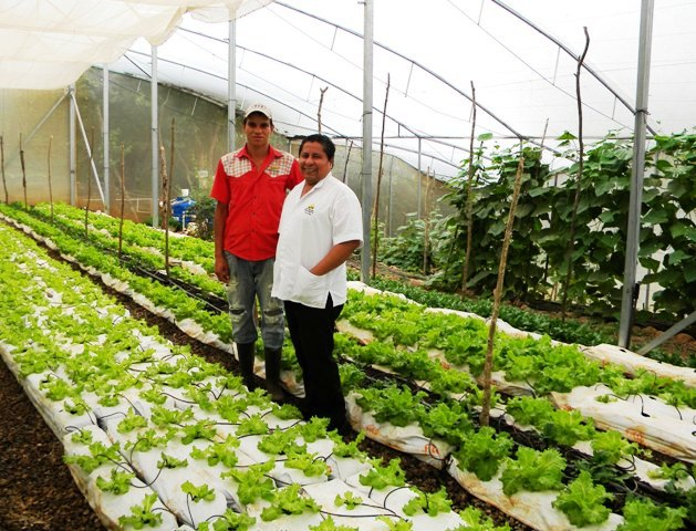 Hacienda Guachipelin restaurant hydroponic greenhouse
