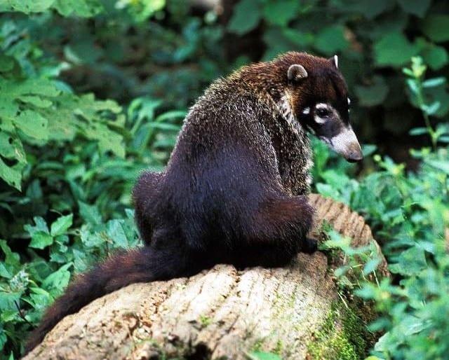 8 Tips to Spot Rainforest Wildlife in Costa Rica