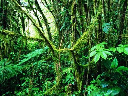 Monteverde Cloud Forest in Costa Rica