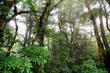 Amazing travel destination: the Monteverde Cloud Forest Reserve in Costa Rica