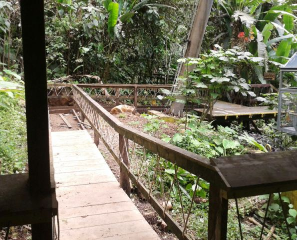 Accessible wheelchair minitrail new at Veragua Rainforest