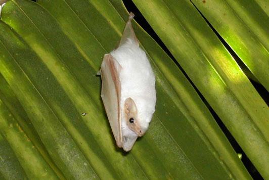 Bat Jungle in Monteverde Costa Rica