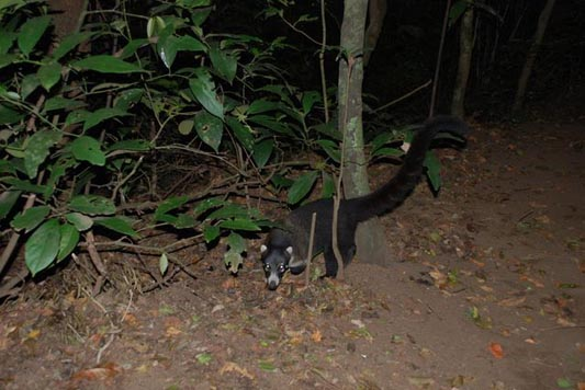Night Walk in Monteverde Costa Rica