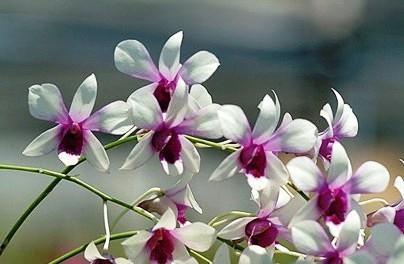 Orchids at Casa Orquideas Botanical Garden Golfo Dulce Costa Rica