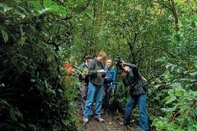 Monteverde, the place where birds flock around you