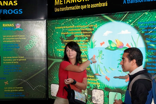 Frog habitat interactive display at Veragua