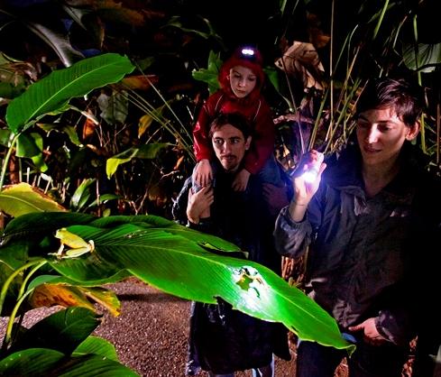 Frog habitat - night frogs - Veragua