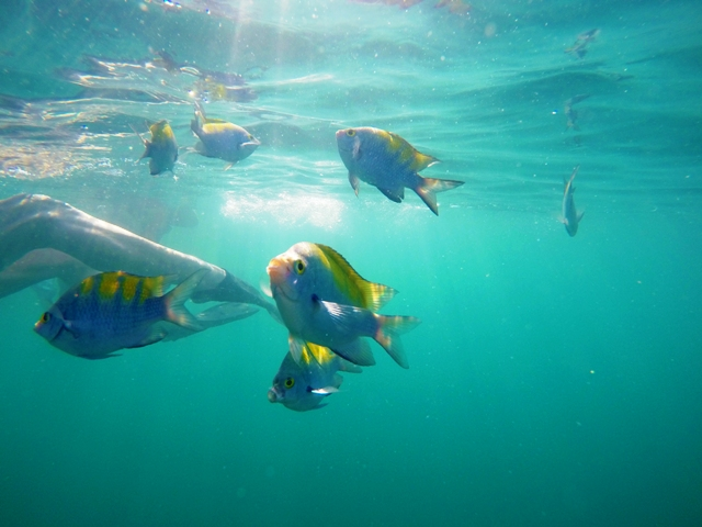 Snorkeling at Manuel Antonio
