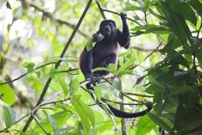 Veragua Rainforest certified in sustainable tourism in Costa Rica