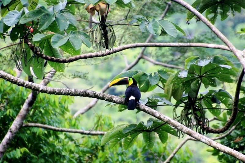 Costa Rica wildlife at Portasol Living