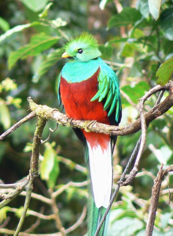 Quetzal01