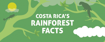 COSTA RICA´S RAINFOREST FACTS