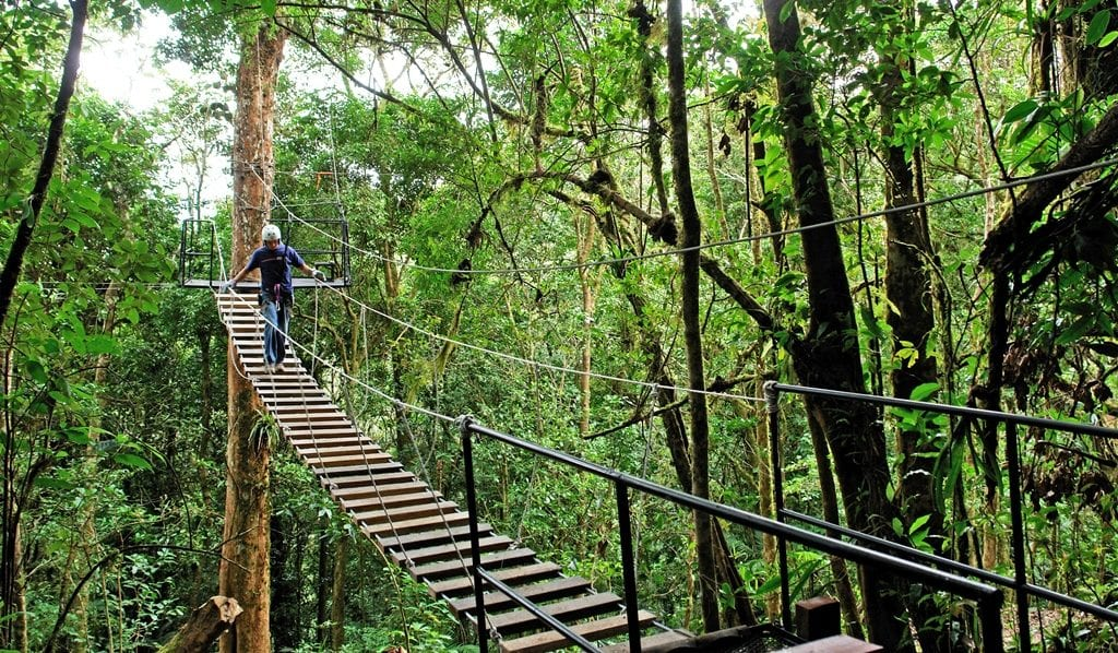 Hanging bridge overlooking Cloud Forest, El Establo Mountain Resort