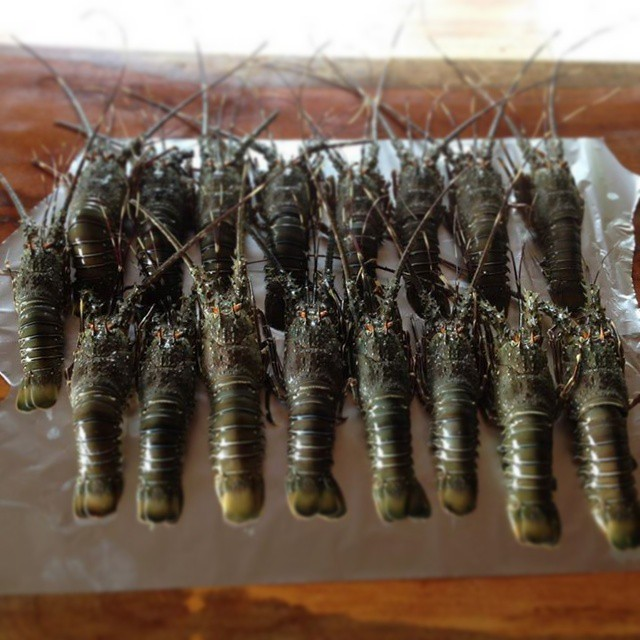 Fresh lobsters arriving at Luc's Seafood Grill & Chapa, photo credit by lucianoriotti