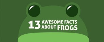 13 awesome facts about frogs
