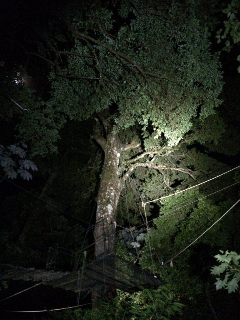 Perfect observation spot during Night Walk at El Establo Mountain Hotel