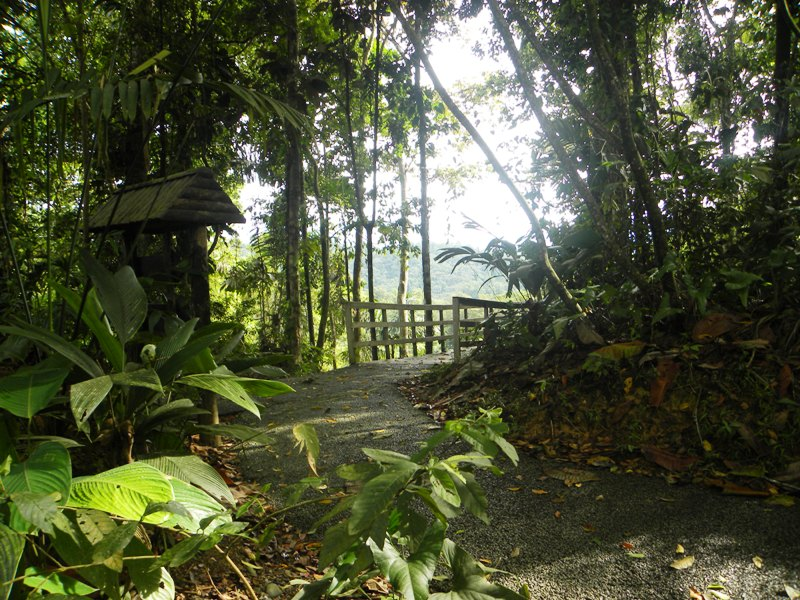 veragua-rainforest-eco-adventure-in-costa-rica