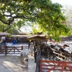 horse-corrals-at-hotel-hacienda-guachipelin