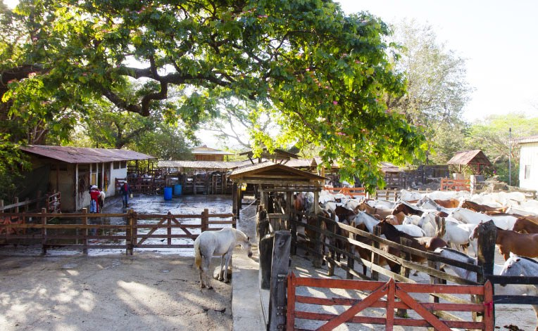 Costa Rica Culture & Tradition Flourish at Hacienda Guachipelin
