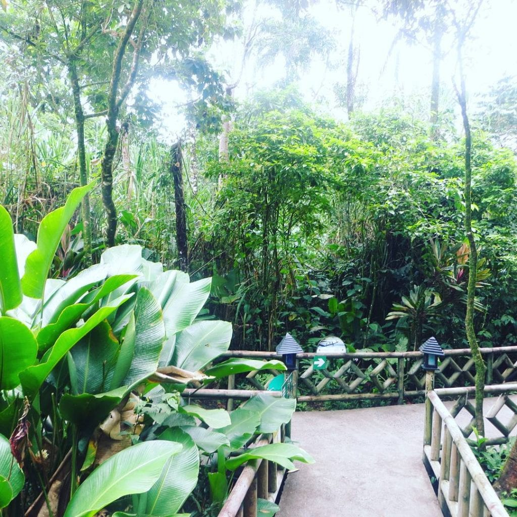 Lush gardens at Pachira Lodge, Tortuguero. Photo credit misviajesporelmundo.