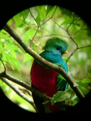 Birding at El Establo Mountain Hotel in Monteverde, Costa Rica