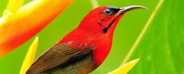 Go to the Caribbean for Best Bird-Watching in Costa Rica