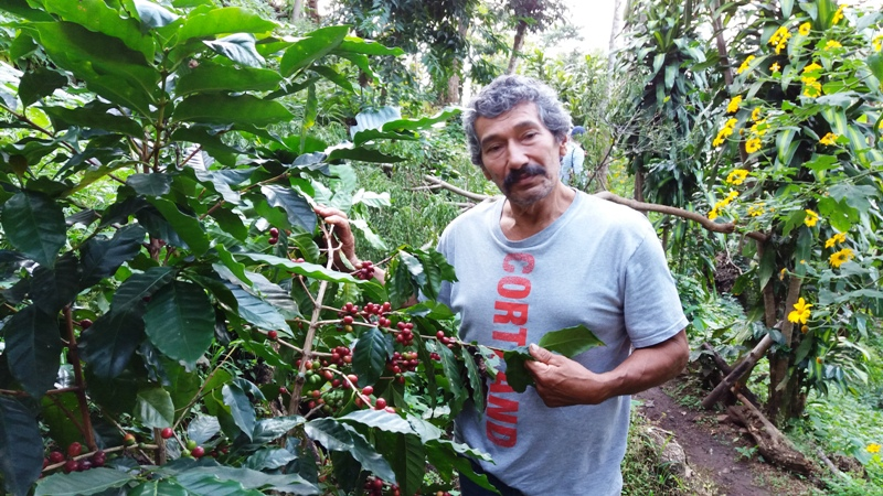 el-toledo-coffee-tour-atenas-costa-rica