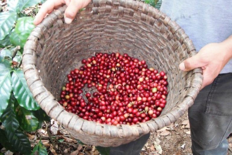 Christmas means coffee season in Atenas, Costa Rica!