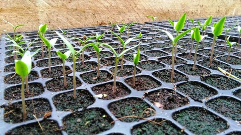 New hydroponic garden at eco-hotel Nicuesa Rainforest Lodge in Costa Rica
