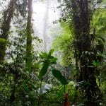 Santa Elena Cloud Forest, photo Wikimedia.