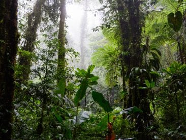5 plant species to look out for in Monteverde Cloud Forest
