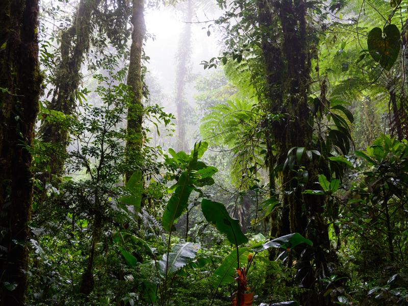 Santa Elena Cloud Forest, photo Wikimedia.