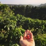 "View from El Trapiche Coffee Tour, red ""cherries"" in hand, photo credit brko0003."
