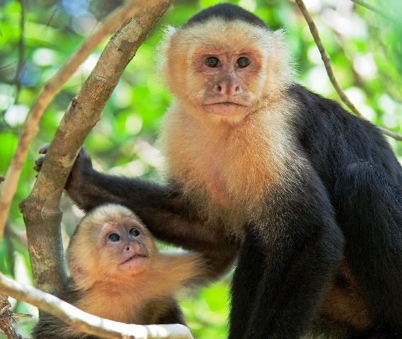 See Costa Rica Wildlife in the Jungle at Nicuesa Lodge