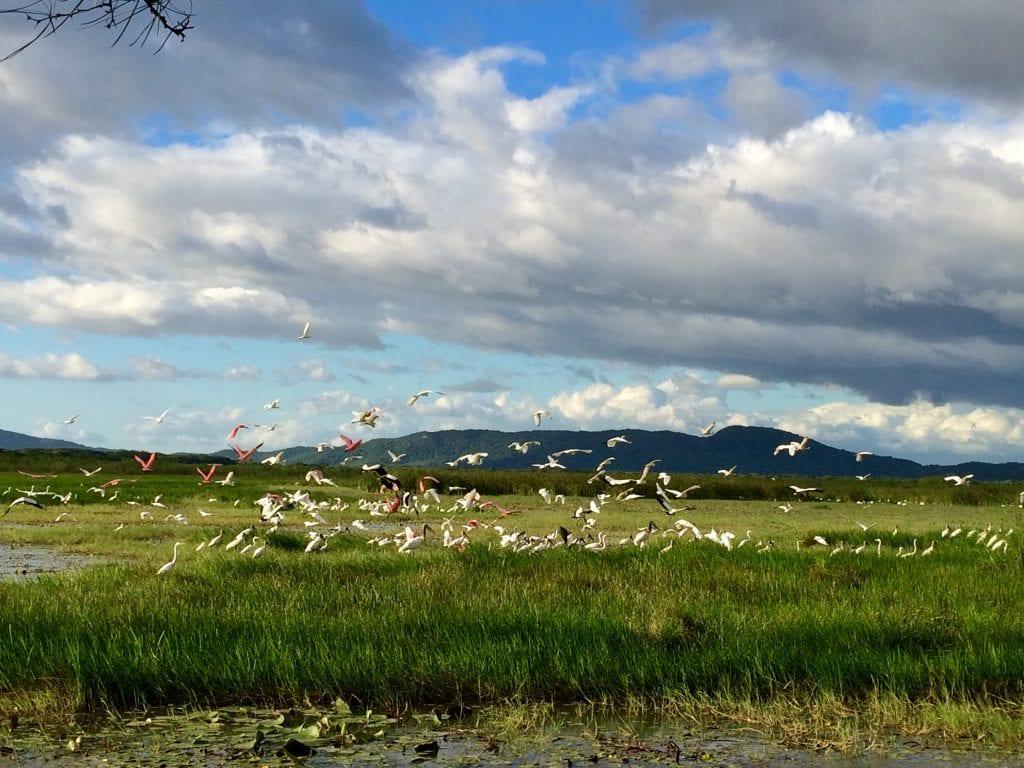 Variedad de aves disfrutando de los humedales. Foto cortesía Rancho Humo.