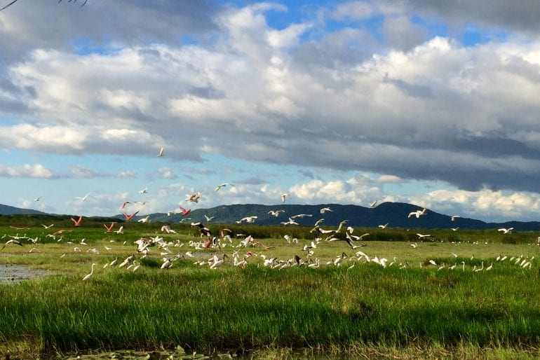 Avistamiento de aves en Rancho Humo en tour tipo safari